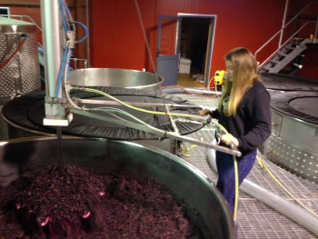 Romy plunging the Pinot