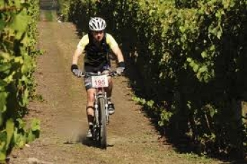 Cycling through the vines Chard Farm