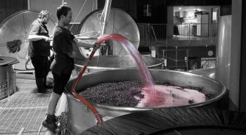 Pinot Pumpover at Chard Farm
